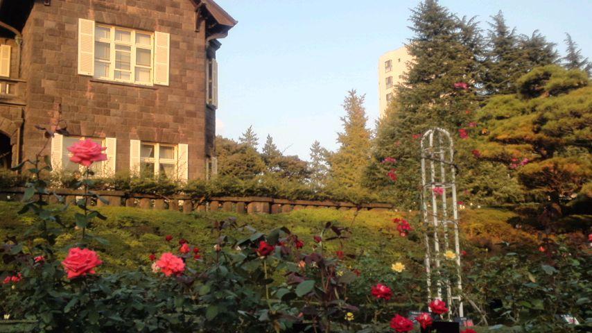 旧古河庭園のバラとアカペラ
